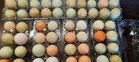 Яйца Деревенские - Куриные (микс разных цветов от разных пород)