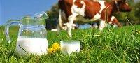 Молоко коровье - сырое