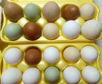 Яйца домашние - (МИКС) Куриные, Цесариные, Перепелиные
